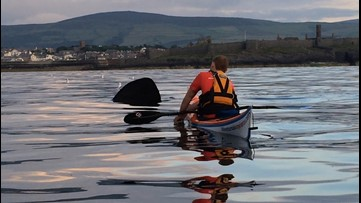 Watch Kayaker's Shockingly Close Encounter with a Basking Shark