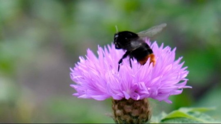 Are Bumblebees Just as Smart as Humans?