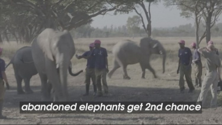 These Adorable Elephants Get a Second Chance in a Protected Wildlife Area