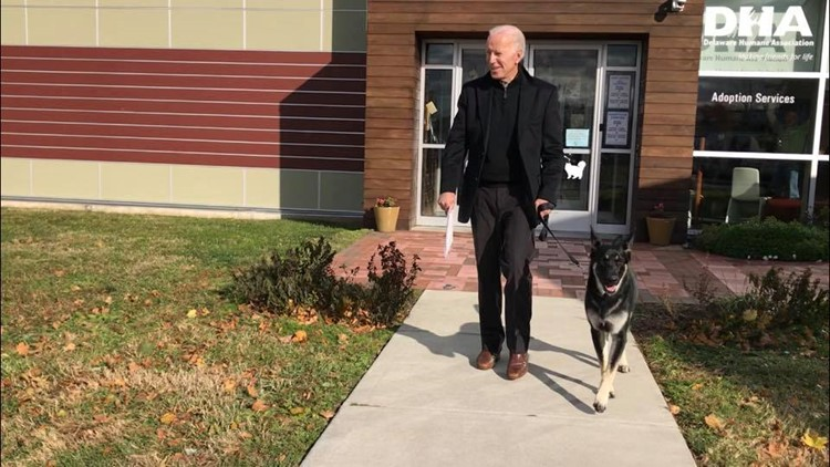 joe biden adopts dog major
