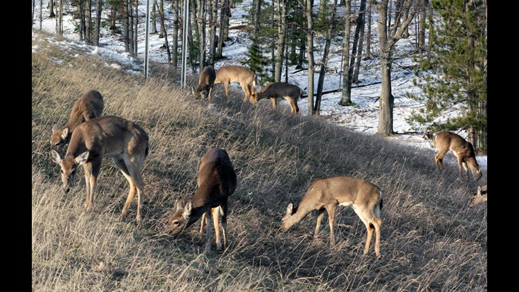 Michigan deer hunters are being warned of bovine tuberculosis found in the animal after a beef herd was confirmed to carry the disease.
