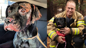'He's Just Adorable': North Charleston Firefighter Adopts Puppy Weeks After Rescue