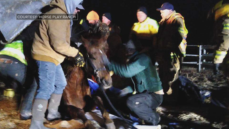 Neighbors work for hours to save elderly horse after fall on ice