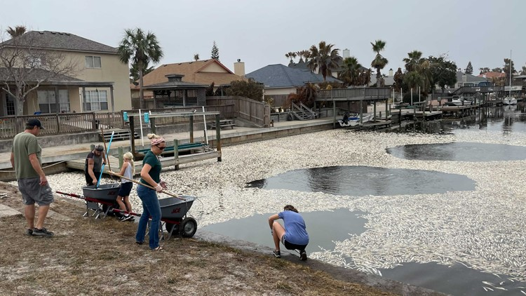 Padre Island residents remove thousands of pounds of dead fish from canals, beaches