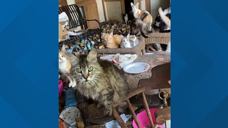 Animal rescue collects around 100 cats, 1 dog from Arkansas home