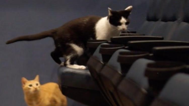 1,000+ cat videos received for 'Quarantine Cat Film Festival' so far