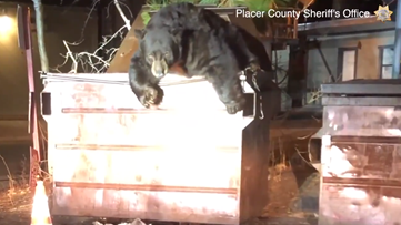 WATCH: Deputies help giant bear escape from dumpster in California