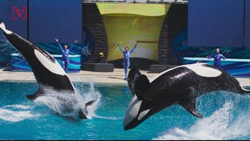 SeaWorld is Making a Comeback After Years Of Declining Revenue and Attendance
