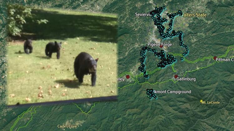 GSMNP GSP Elkmont Bear Map Plot to Sevierville