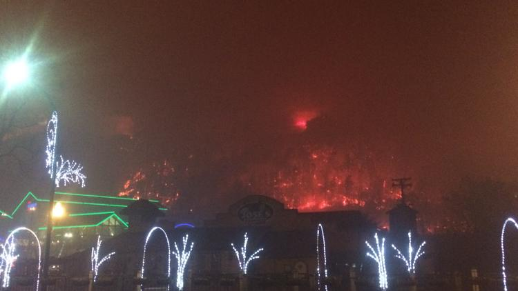 They were surrounded by fire, but Ripley's animals are safe