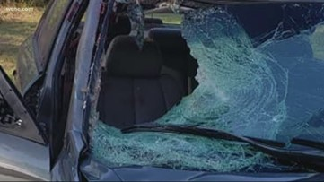 Deer slams through windshield hitting South Carolina woman in the passenger seat