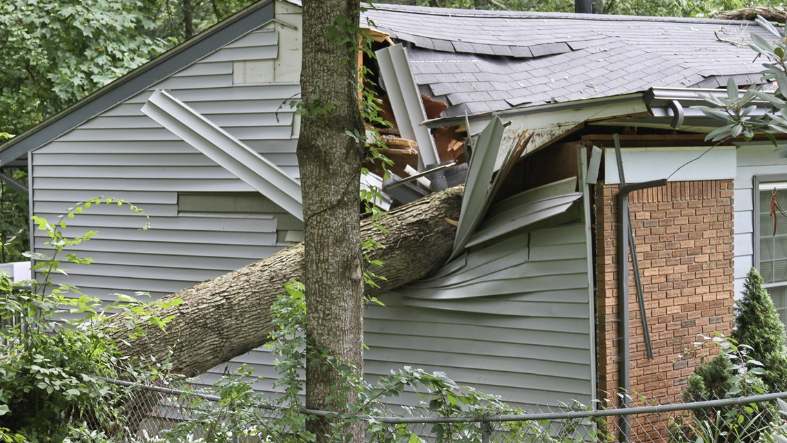 Why now is the time to remove dead trees from your property