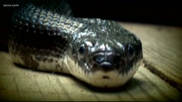 Snake knocks out power outage to thousands of NC homes
