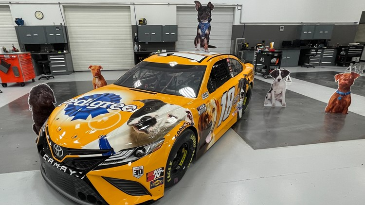 Kyle Busch's car will be wrapped in photos of adoptable dogs in Charlotte for Sunday's race