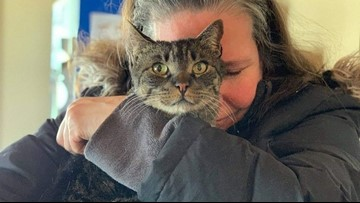 This cat went missing 5½ years ago. Now he's reunited with his family