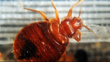 Was that a bed bug on my couch? This app has the answer