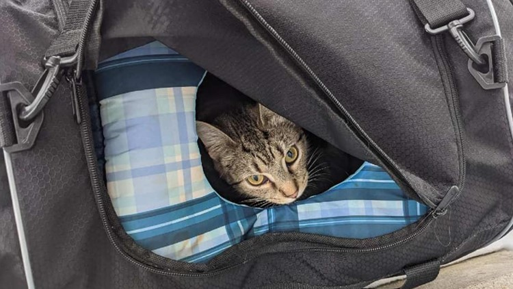 No cat-astrophe: Police find kittens in 'suspicious package'