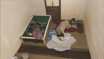 Owner criminally charged after more than 100 animals seized from eastern Kentucky property