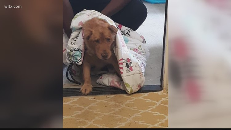 Two dozen dogs rescued from poor living conditions in Kershaw County