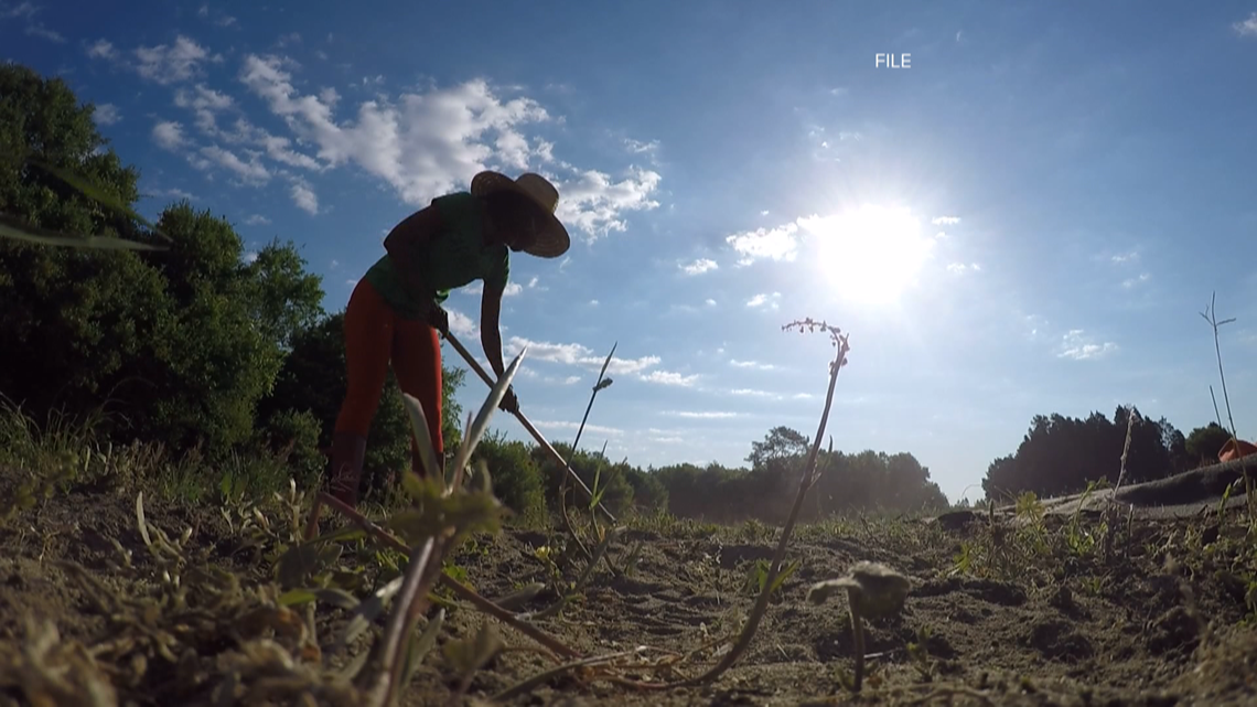 SC State awarded $750,000 grant to train beginning farmers