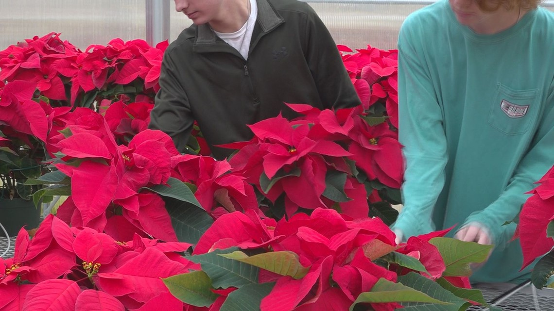Midlands students raise and sell Poinsettias