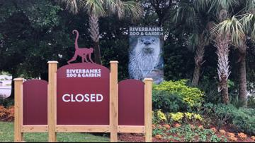 Riverbanks Zoo ready to reopen, implementing new safety guidelines