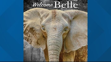Belle arrives at new home in Milwaukee