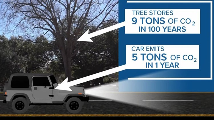 Trees help clean the atmosphere. Here's how.