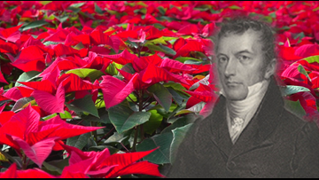 Poinsettias have deep roots in South Carolina