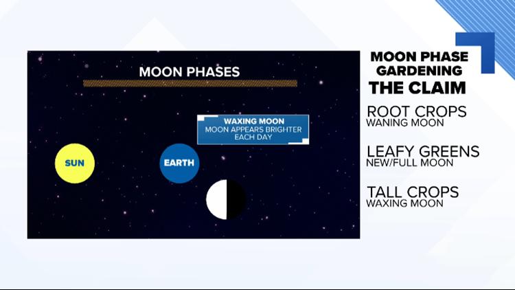 Debunking 'Moon Phase Gardening'