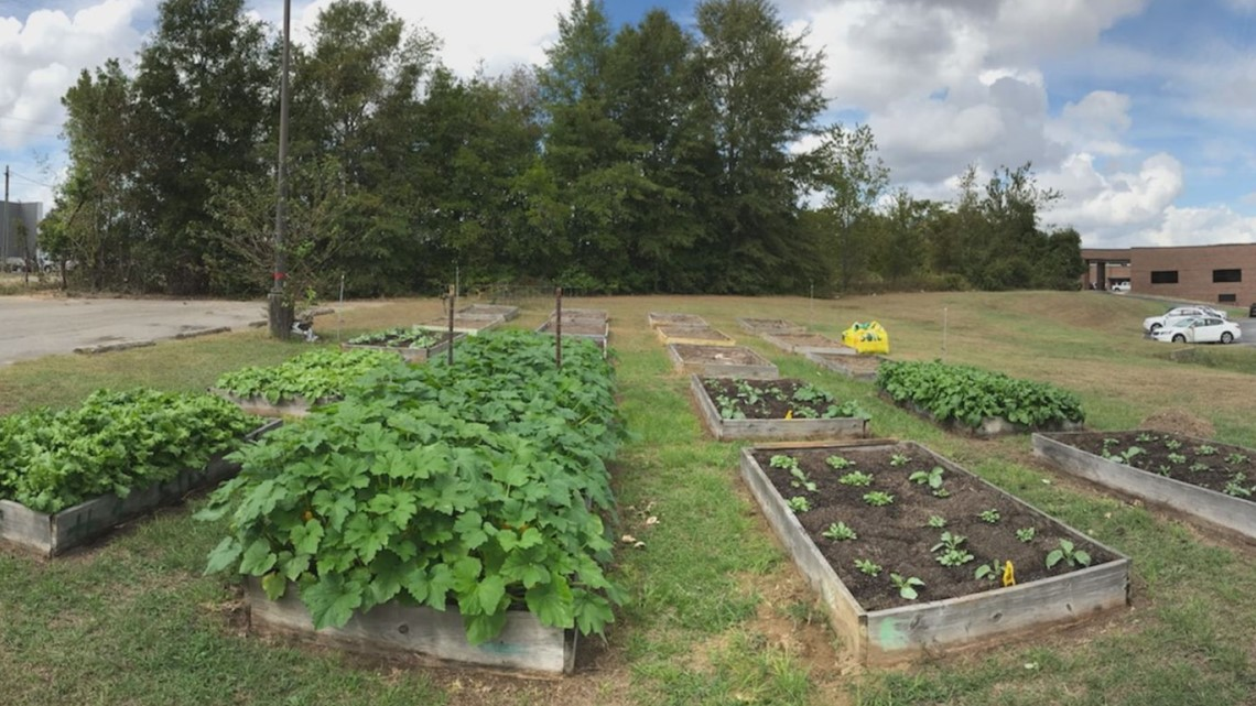 Medical center is helping the hungry with a community garden