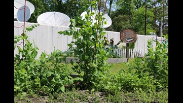 """Protect the garden from pests with """"companion planting"""""""