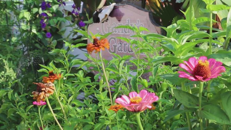July in Gandy's Garden at WLTX