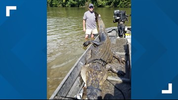 Florence hunters catch 12 foot, 726 pound gator