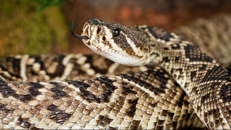 More than 90 snakes found under Northern California home