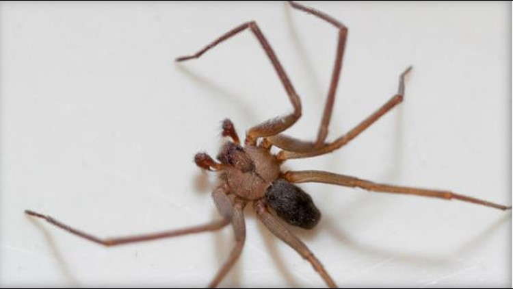 Waking up to an infestation of spiders in your bedroom may sound like a horrible nightmare, but it was very much reality for a Tennessee woman.