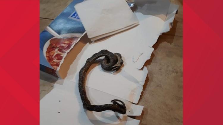 pizza snake 010219
