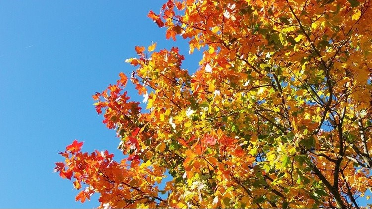When is the best time for leaf peeping in South Carolina?