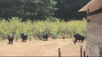 AgArt Tour Carolina Bay Farms