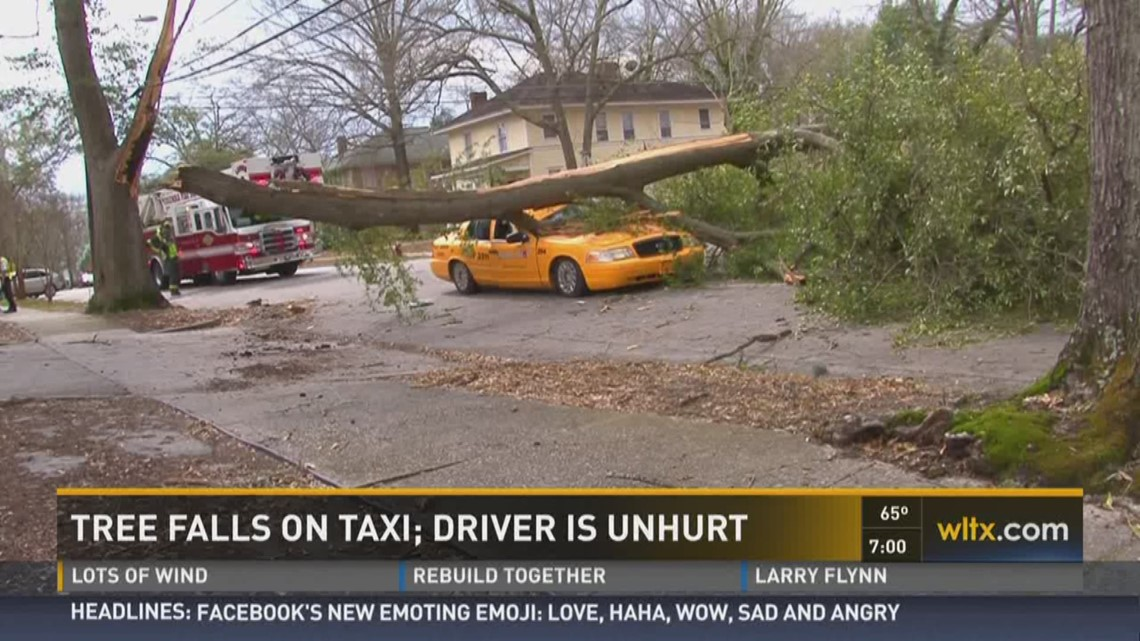 Taxi Driver Survives Tree Falling On Car Wltx Com
