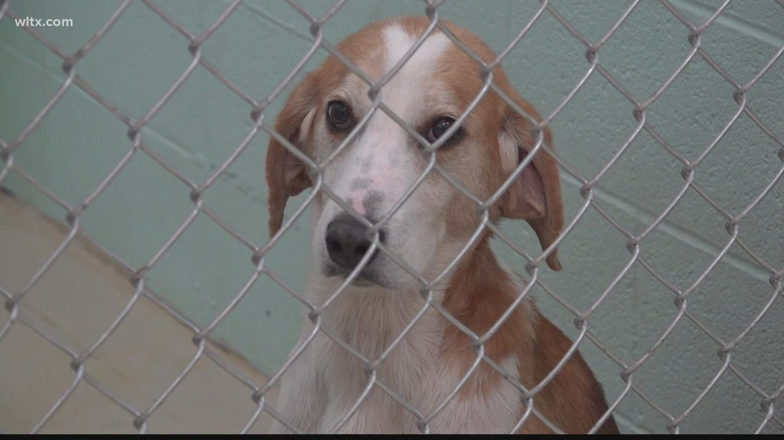 Sumter's new animal shelter almost ready to open