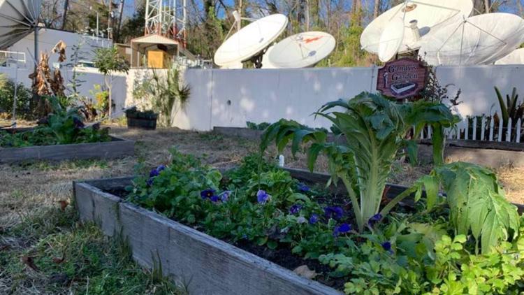 Gandy's Garden: Tasty produce you can grow in January