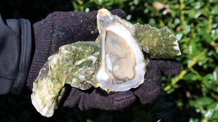 South Carolina shellfish season set to open Sept. 28