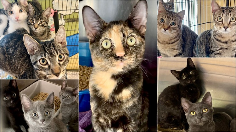 Adopted a cat or kitten for $25 during Pawmetto Lifeline's 'Kitten Palooza'