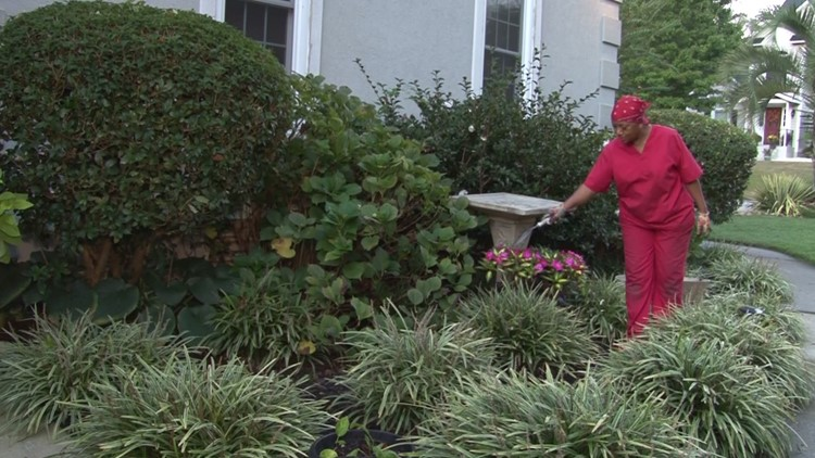 Irmo woman finds her peace amid 300 plants. Neurology suggests she's onto something