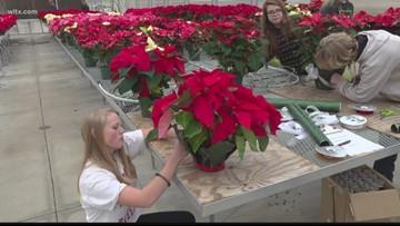 Richland/Lexington students help grow, sell  poinsettias