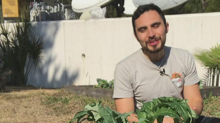 Gardening in South Carolina in January
