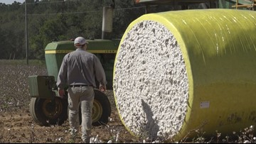 'A drought is good for nothing'; Dry conditions take toll on SC farmers