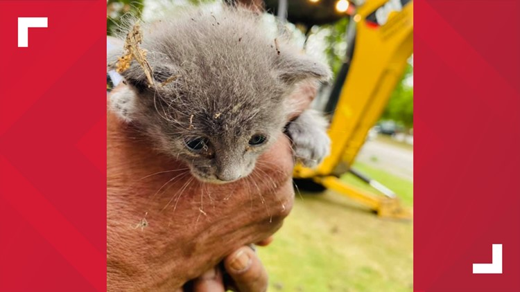 Sumter EMS saves kitten stuck in storm drain