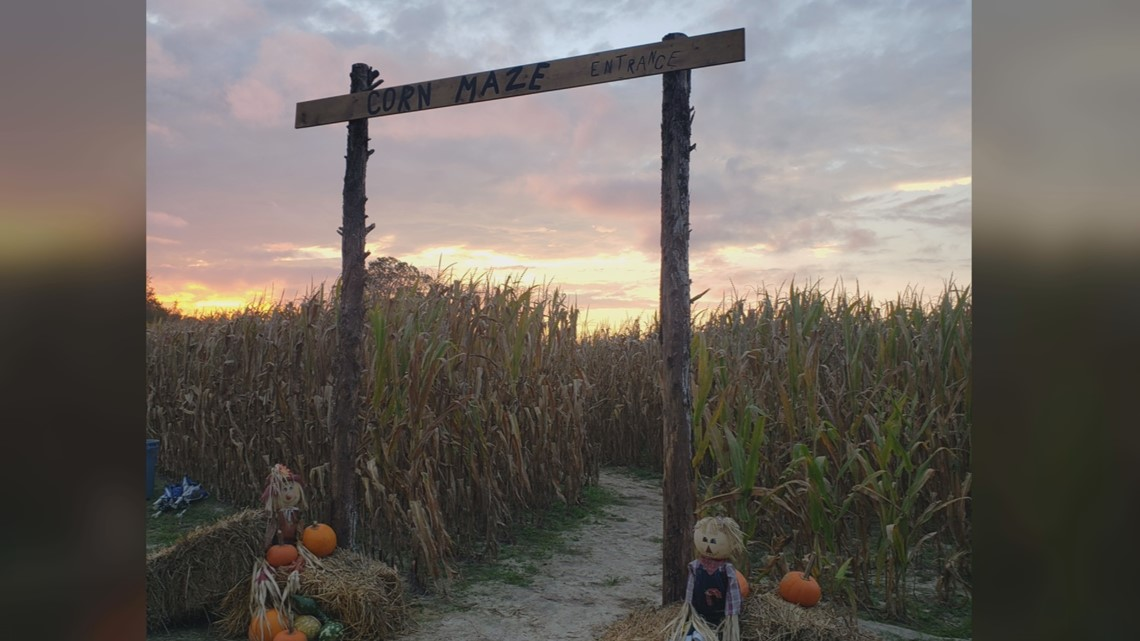 Hayride, pumpkin patch and more at Fall Farm Days in Sumter County